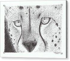 Cheetah Face Acrylic Print by Todd Hodgins