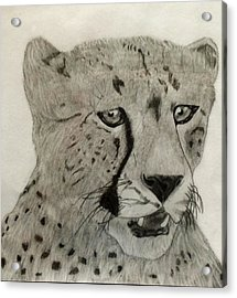 Cheetah II Acrylic Print by Noah Burdett