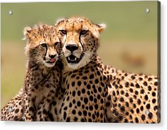 Cheetah Mother And Cub In Masai Mara Acrylic Print by Maggy Meyer