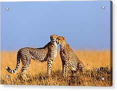 Cheetah Mother With Daughter Masai Mara Acrylic Print by Maggy Meyer