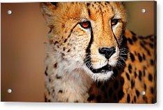 Cheetah Portrait Acrylic Print