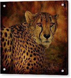 Cheetah Acrylic Print by Sandy Keeton