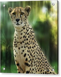 Cheetah Spots Acrylic Print by Elaine Manley