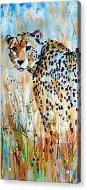 Cheetah Acrylic Print by Steven Ponsford