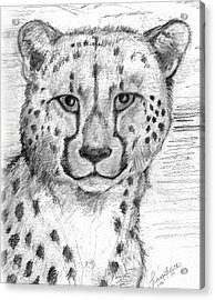 Cheetah Acrylic Print by Tricia Griffith