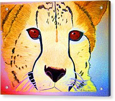 Cheetah With Color Acrylic Print by Jean Marie Economen