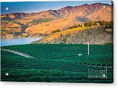 Chelan Vineyard Sunset Acrylic Print by Inge Johnsson