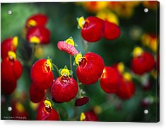 Acrylic Print featuring the photograph Chelsea Red by Ross Henton