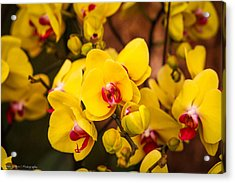 Acrylic Print featuring the photograph Chelsea Yellow by Ross Henton