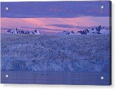 Chenega Glacier At Sunrise Acrylic Print by Tim Grams
