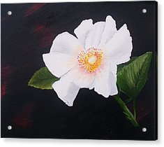 Cherokee Rose Acrylic Print by Valorie Cross