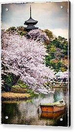 Cherry Blossom 2014 Acrylic Print