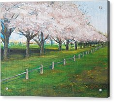 Acrylic Print featuring the painting Cherry Blossom Christchurch by Jane  See