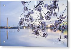 Cherry Blossom Dawning Acrylic Print by Terry Rowe