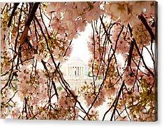 Cherry Blossom Flowers In Washington Dc Acrylic Print