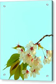 Acrylic Print featuring the photograph Cherry Blossom Flowers by Rachel Mirror