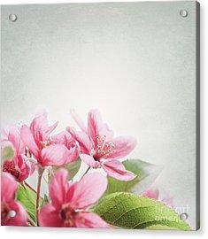 Cherry Blossom Acrylic Print by Jelena Jovanovic