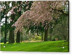 Cherry Blossom Acrylic Print by Sabine Edrissi