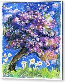 Cherry Blossom Spring. Acrylic Print