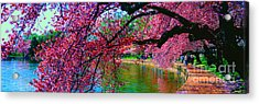 Acrylic Print featuring the photograph Cherry Blossom Walk Tidal Basin At 17th Street by Tom Jelen