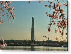 Cherry Blossoms 2013 - 012 Acrylic Print by Metro DC Photography
