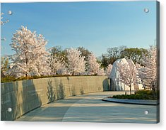 Cherry Blossoms 2013 - 022 Acrylic Print by Metro DC Photography