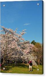 Cherry Blossoms 2013 - 029 Acrylic Print