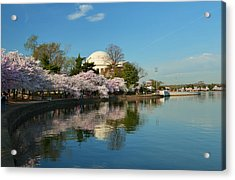 Cherry Blossoms 2013 - 041 Acrylic Print by Metro DC Photography