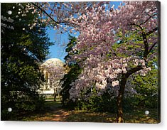 Cherry Blossoms 2013 - 047 Acrylic Print by Metro DC Photography