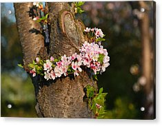Cherry Blossoms 2013 - 064 Acrylic Print by Metro DC Photography