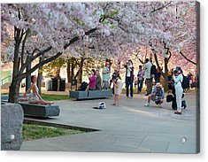 Cherry Blossoms 2013 - 069 Acrylic Print by Metro DC Photography