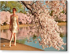 Cherry Blossoms 2013 - 080 Acrylic Print by Metro DC Photography
