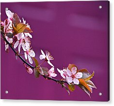 Cherry Blossoms And Plum Door Acrylic Print