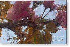 Cherry Blossoms By Van Gogh Acrylic Print
