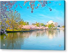 Cherry Blossoms From Shadow To Light Acrylic Print