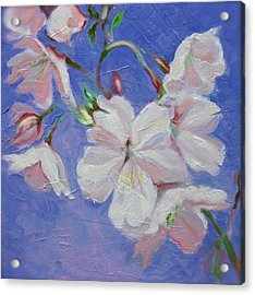 Cherry Blossoms Acrylic Print by Karen Roncari