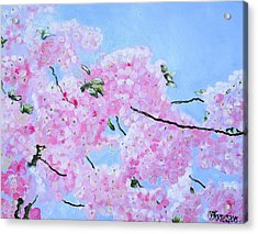 Cherry Blossoms Acrylic Print by Melissa Torres