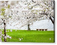 Cherry Blossoms On The Shore Of Fort Mchenry Acrylic Print