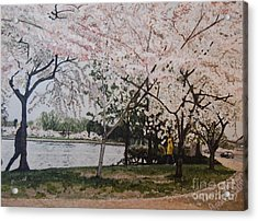 Cherry Blossoms Acrylic Print by Terry Stephen