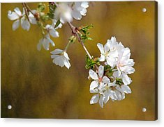 Acrylic Print featuring the photograph Cherry Blossoms by Trina  Ansel