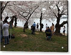 Cherry Blossoms - Washington Dc - 0113132 Acrylic Print by DC Photographer