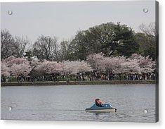 Cherry Blossoms - Washington Dc - 011314 Acrylic Print by DC Photographer