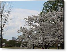 Cherry Blossoms - Washington Dc - 011347 Acrylic Print