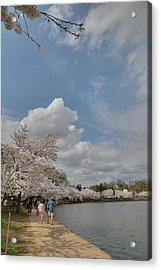 Cherry Blossoms - Washington Dc - 011370 Acrylic Print by DC Photographer