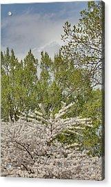 Cherry Blossoms - Washington Dc - 011388 Acrylic Print by DC Photographer