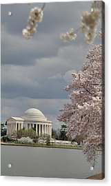 Cherry Blossoms With Jefferson Memorial - Washington Dc - 011310 Acrylic Print
