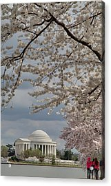 Cherry Blossoms With Jefferson Memorial - Washington Dc - 011315 Acrylic Print