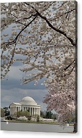 Cherry Blossoms With Jefferson Memorial - Washington Dc - 011316 Acrylic Print by DC Photographer