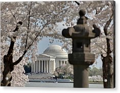 Cherry Blossoms With Jefferson Memorial - Washington Dc - 011325 Acrylic Print by DC Photographer