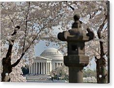 Cherry Blossoms With Jefferson Memorial - Washington Dc - 011326 Acrylic Print